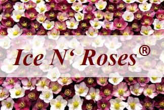 Ice N' Roses