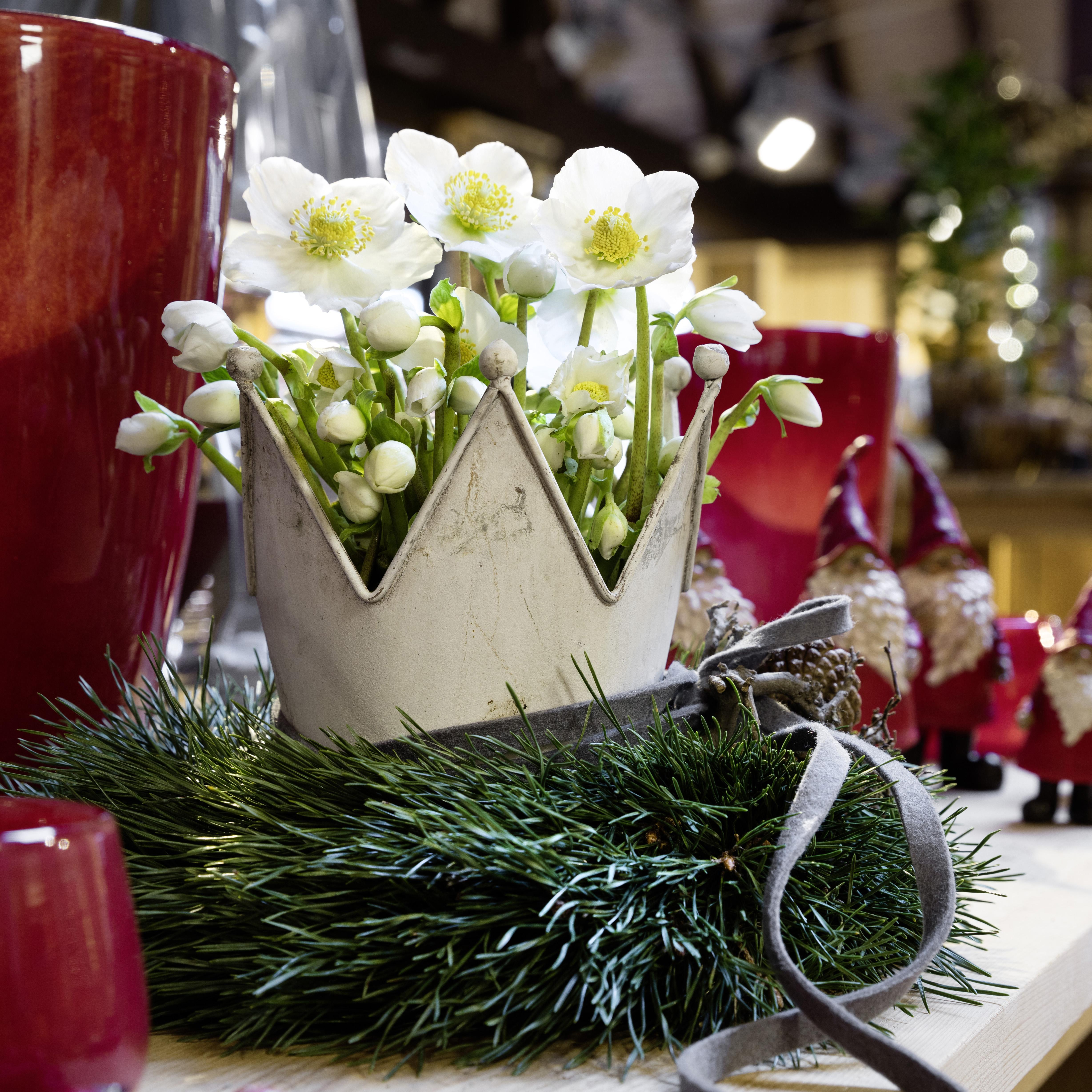 White Christmas | Heuger Gartenbaubetriebe