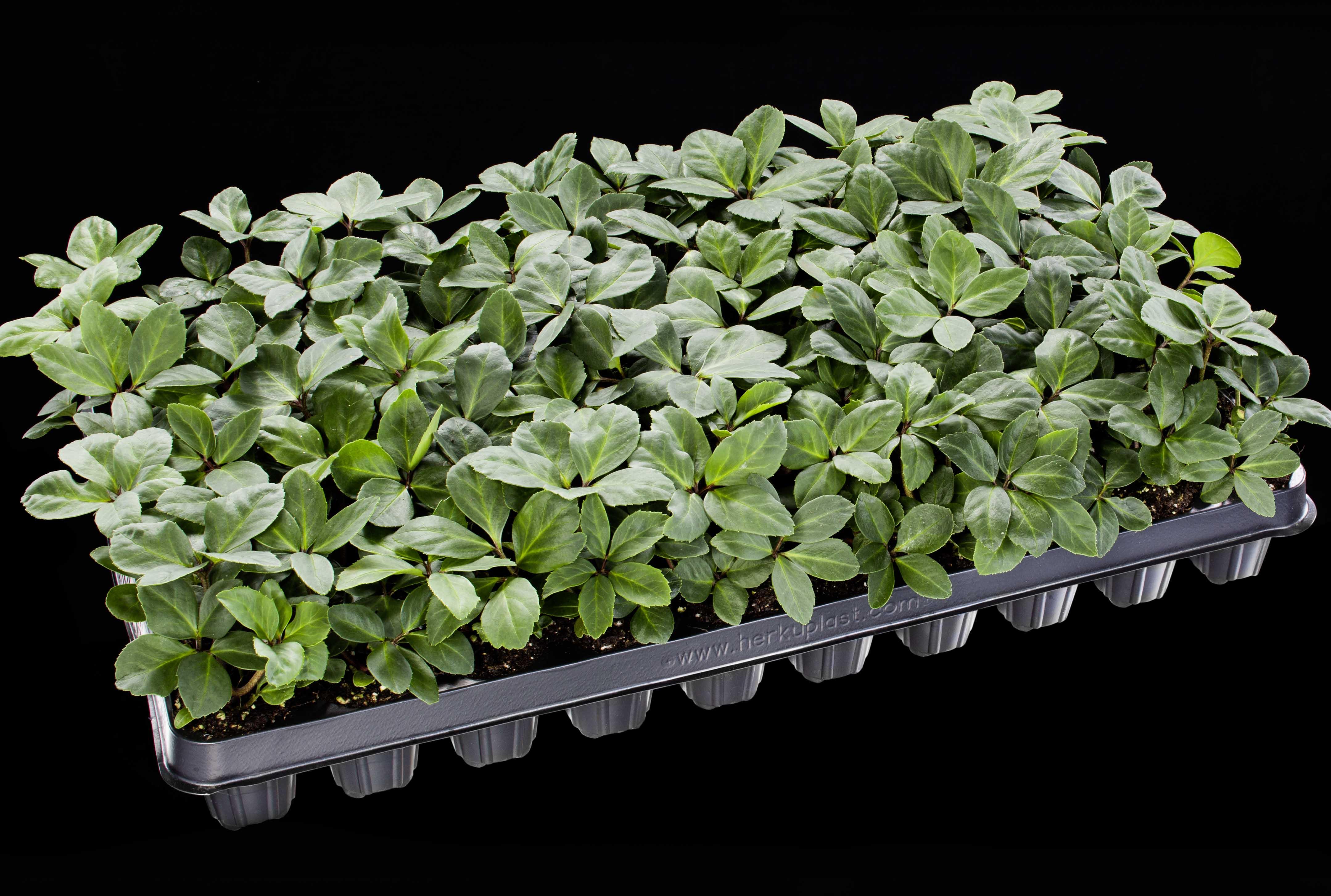 Gartenbaubetriebe  Young plants | Heuger Gartenbaubetriebe