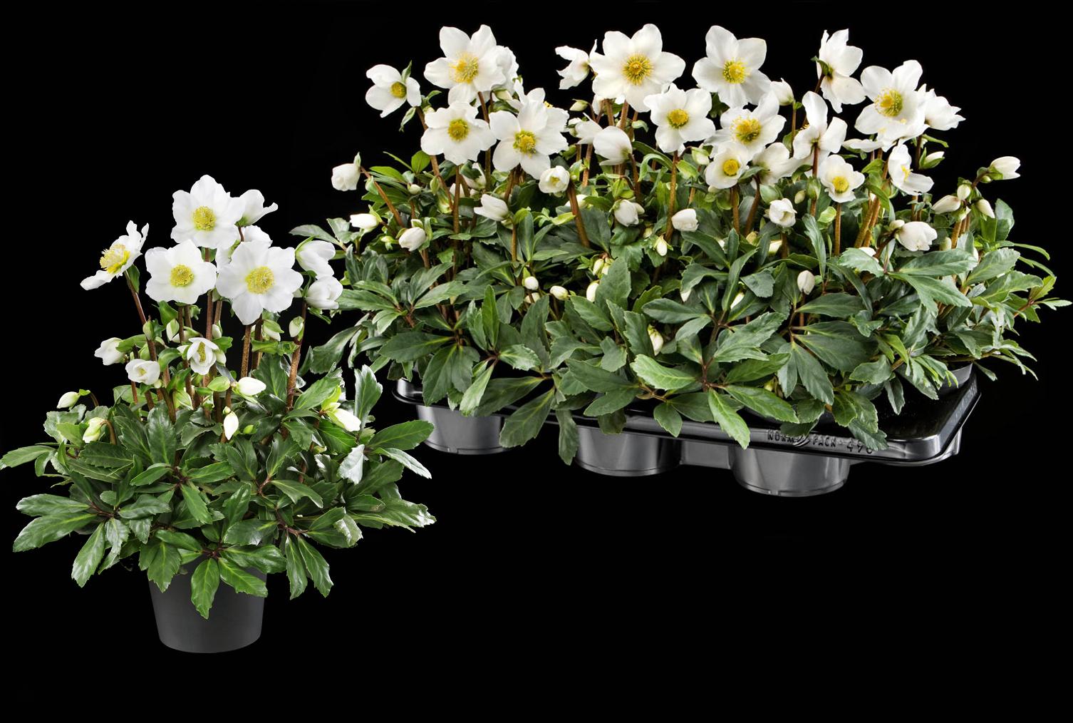 Gartenbaubetriebe  Flowering plants | Heuger Gartenbaubetriebe